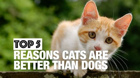 8 Reasons Why Dogs Are Better Than Cats by Top Five Reasons Cats Are Better Than Dogs