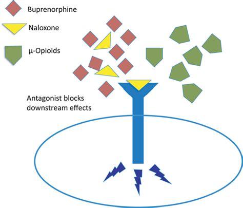 Detox For Buprenorphine And Naloxone by Buprenorphine Naloxone Therapy In Management