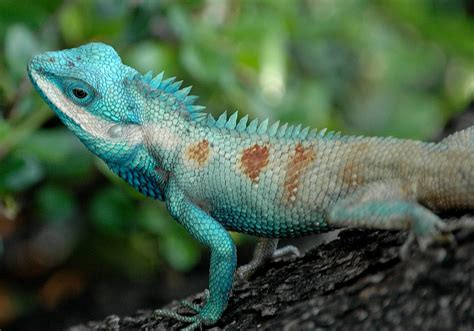 Reptile L by Sorted Pictures Of Reptile Quality Pictures On Animal