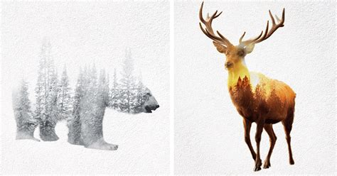double exposure gifs of wild animals show how humans