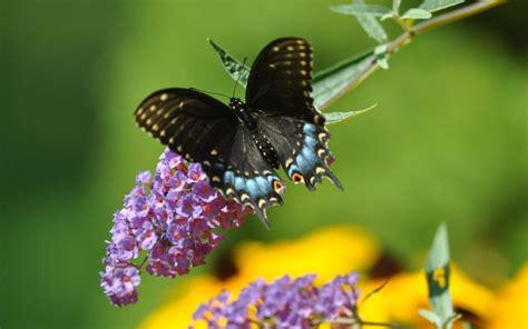 imagenes con mariposas bonitas im 225 genes de mariposas hermosas