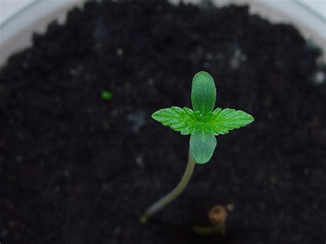 Pot Plant Baby better health better living hopegrown
