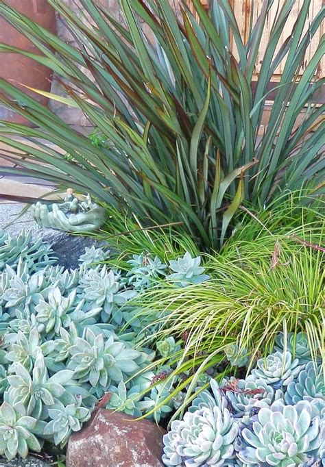 254 best images about planting combos on pinterest kangaroo paw agaves and ornamental grasses