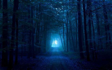 wallpaper blue forest dark blue forest blue dark path 3015