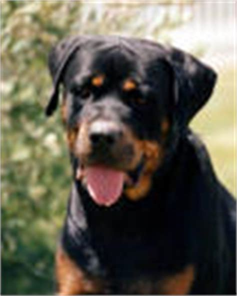 do rottweilers attack their owners tennessee vicious attacks injury lawyers