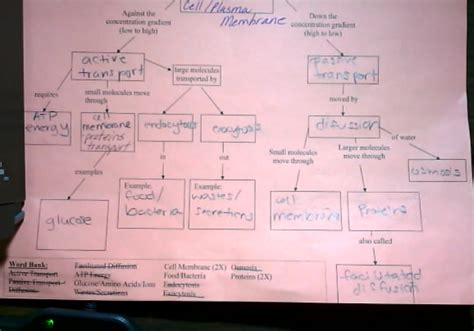 cell concept map answers cell transport concept map answer key mrs derochers