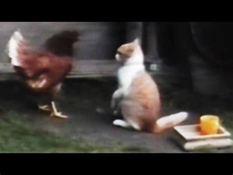 funny animal  compilation  youtube