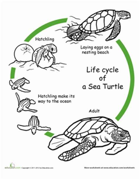 cycle of a turtle diagram literature for learners enero 2014