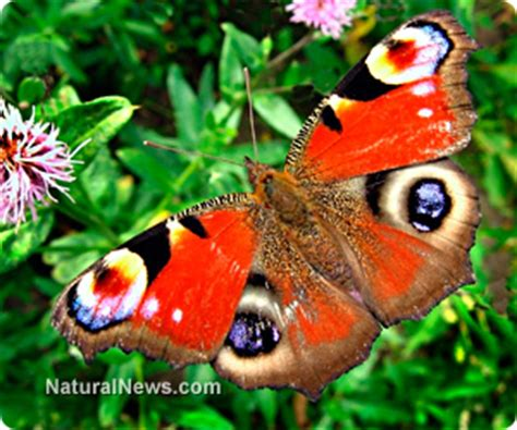 pattern formation and eyespot determination in butterfly wings scientists develop amazing new waterproof surface that