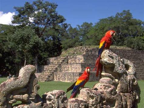 imagenes de mayas en honduras informaci 243 n de las ruinas de cop 225 n en honduras