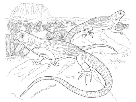 coloring pages desert animals free coloring pages of desert lizard