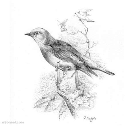 bird art drawing birds 30 beautiful bird drawings and art works for your inspiration