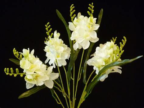 imagenes de flores nardos todo flor
