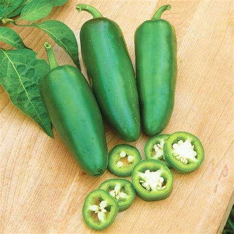 hot big guy hybrid pepper new fruit and vegetable varieties for 2013 plants