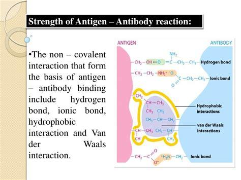 explain the antigen antibody reaction diagram diagram of der waals forces catalyst diagram elsavadorla