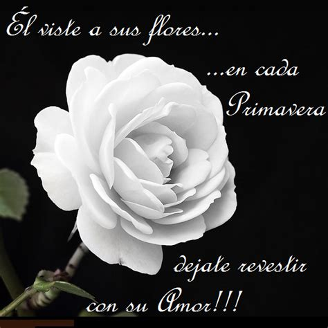 imagenes rosas con frases cristianas frases cristianas con flores rojas ramos de flores para