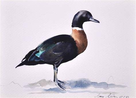 mary woodin england illustrator mallard ducks works on paper mary milton australian art auction records