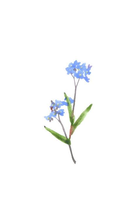 small forget me not tattoo 1000 ideas about small flower tattoos on