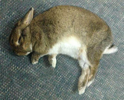 rabbit house society best 25 house rabbit society ideas on pinterest bunny care pet bunny rabbits and