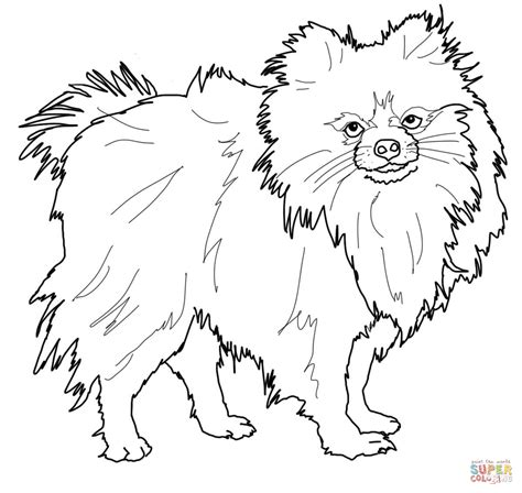 coloring pages of breeds pomeranian animal pet coloring page coloring
