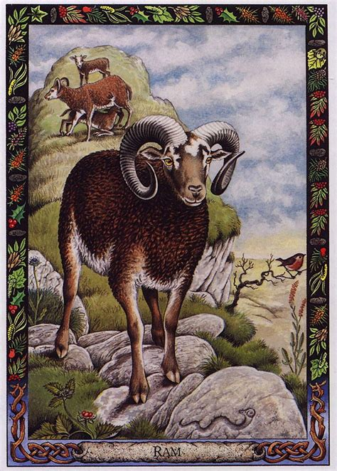 animal tarot cards a 17 best images about druid animal oracle on decks love tarot and seals