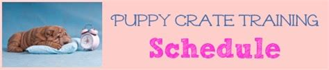 crate schedule for 8 week puppy crate puppies 101