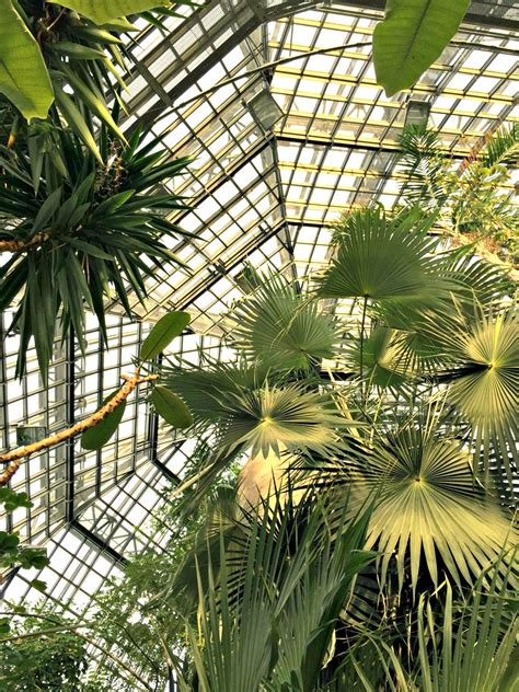 botanischer garten und museum berlin botanischer garten berlin dahlem berlin tipps