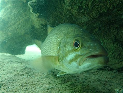 Fish Bio high elevation smallmouth fishbio fisheries research monitoring and conservation