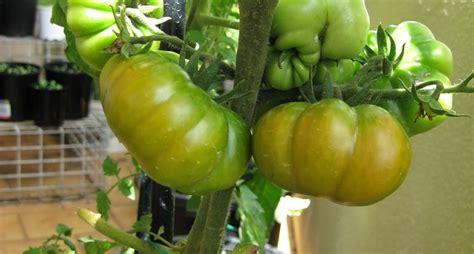 cosa piantare in giardino orto sul balcone cosa piantare orto in terrazzo