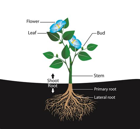 roots the most important part of your plant grow easy parts of a plant 2 worksheet edplace