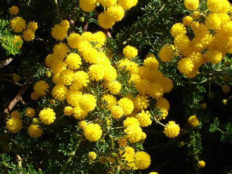 flowering shrub list 1000 images about plant list on west
