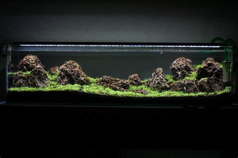 fauna aquascape fauna aquascape fauna aquascape first time aquascape 12 gallon long