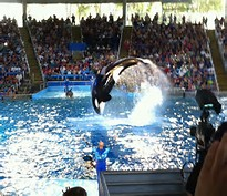 Image result for seaworld san antonio