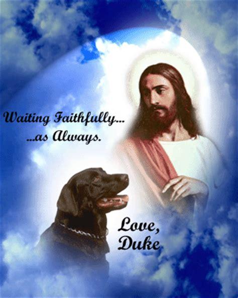 jesus in dogs jesus in