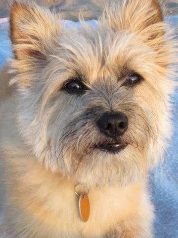 imagenes niños diferentes razas razas de perros peque 241 os peludos medianos perros