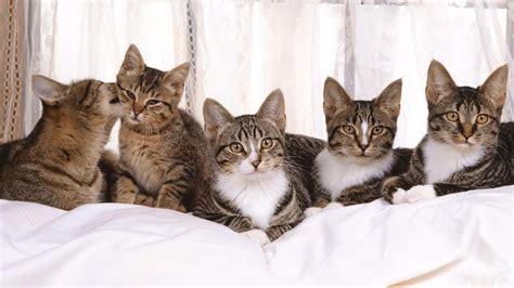 Supercat Kitten 800gr all in one wallpapers cats wallpaper