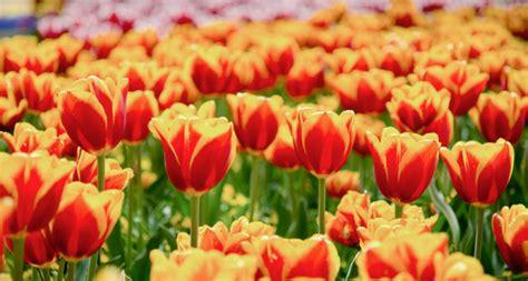 fiori aforismi aforismi e citazioni sui fiori