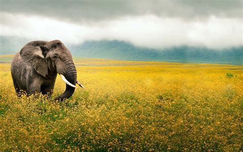 wallpaper full hd elephant hd elephants wallpapers and photos hd animals wallpapers