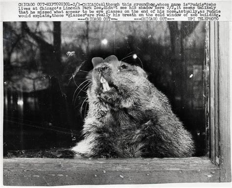 groundhog day meaning if no shadow groundhog day meaning if no shadow 28 images what does