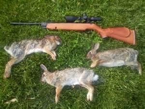 Cheap Hunting Decor Rabbitswiththeairrifle Jpg Photo By Bowman55 Photobucket