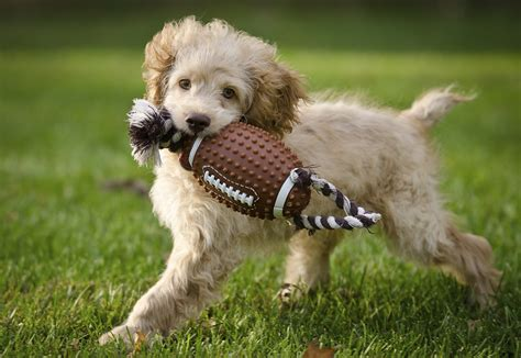 when can puppies go outside for the time fall is here take part in these 5 fall activities with your pet live the pet