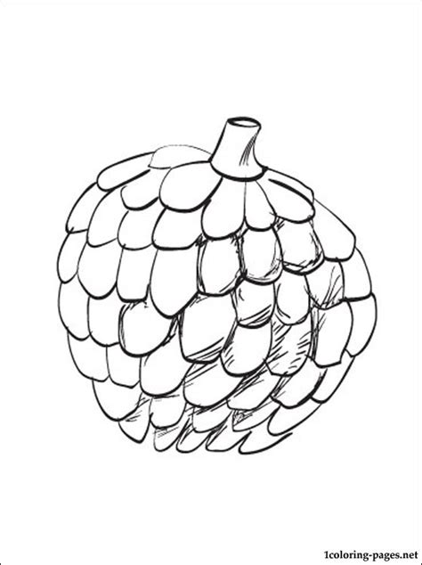custard apple coloring page atis clip art www imgkid com the image kid has it
