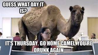 Hump Day Camel Meme - thursday hump day camel memes