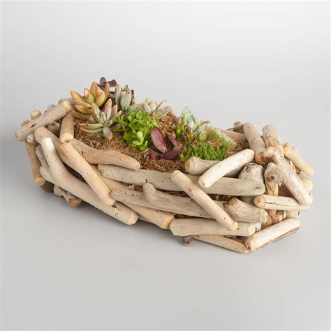 Driftwood Planter by Live Succulent Garden In Driftwood Planter World Market