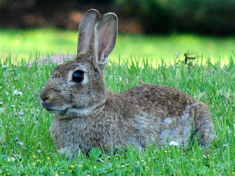 are rabbits color blind the agatelady adventures and events difference between a