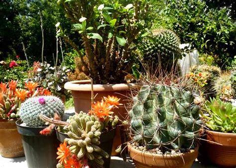 piante grasse da terrazzo piante da terrazzo balconi green tenditrendy