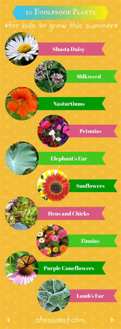 10 Tips On Growing Great Plants This Summer by 10 Foolproof Plants For To Grow This Summer