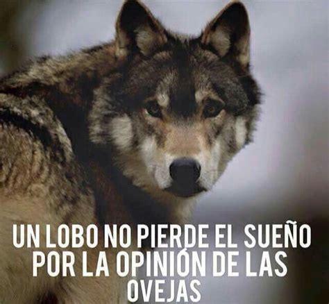 imagenes perronas de lobos meer dan 1000 idee 235 n over imagenes de lobos op pinterest