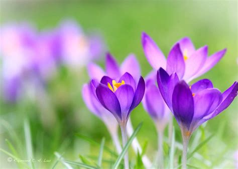 flowers bloom spring flowers blooming beautiful flowers picture