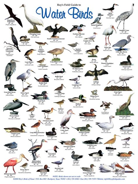 roy s salwater fish and water birds posters